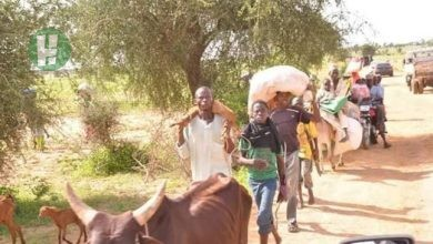 Photo of The cause of Bachama-Fulani killings in Adamawa state
