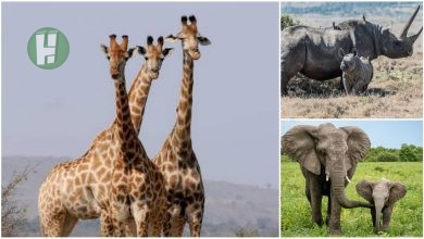 Photo of Names of Wild Animals in Hausa Language and the Culture
